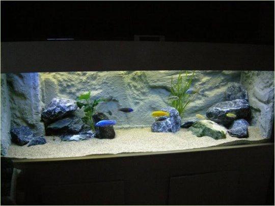Het inrichten van een aquarium voor cichliden uit het Malawimeer   NVC web